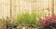 Image for Featheredge Fence Panel